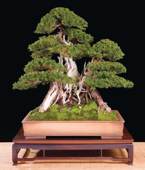 Kevin Willson Bonsai